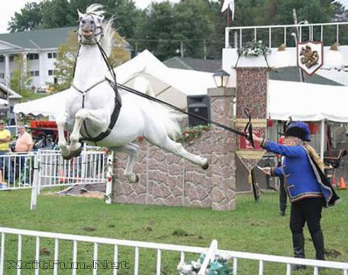 Real Flying Horse Images | www.pixshark.com - Images ...