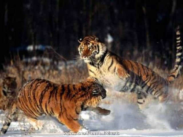 Interesting Animal Fighting Encounters  Fiercest Beasts