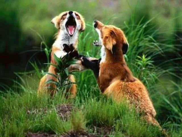 Interesting Animal Fighting Encounters  Fiercest Beasts