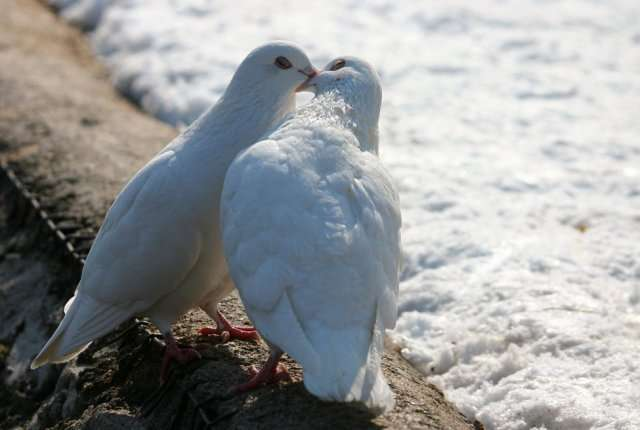 18839xcitefun love 1 - Love is life