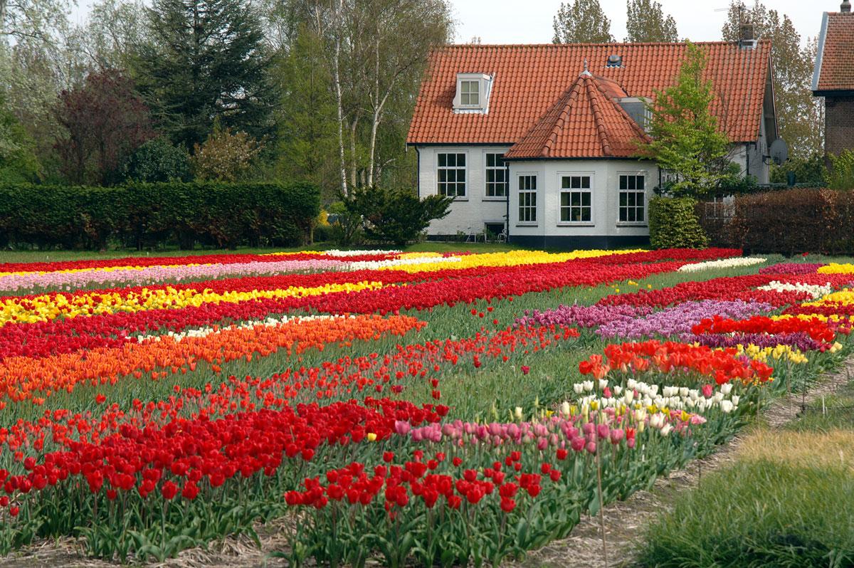 Flower houses - House flower plants ...