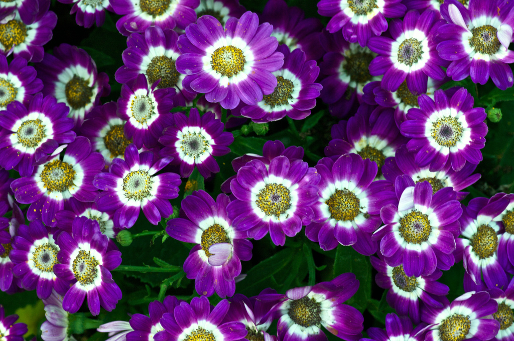 Types Of Purple Flowers Pictures Images Photobucket
