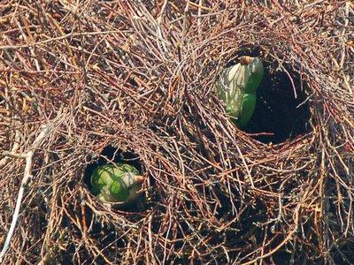 How Parrot Make Nest Xcitefun Net