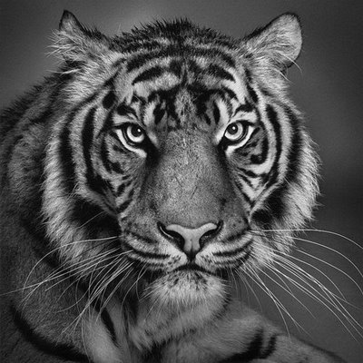 Pencil Drawings of Animals - Very Artistic - XciteFun.net