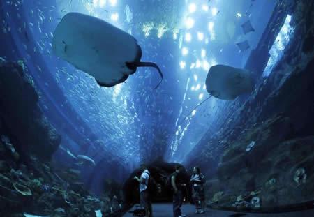7 Breathtaking Aquariums Around The World