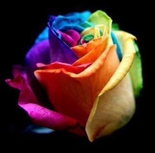 rose game