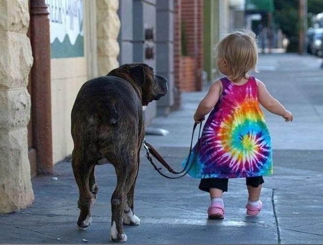 Фото животных и детей - Ребенок выгуливает собаку - Зоотерритория. . Домашние животные