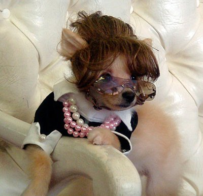 Animals Wearing Wigs Animals lovely hair style