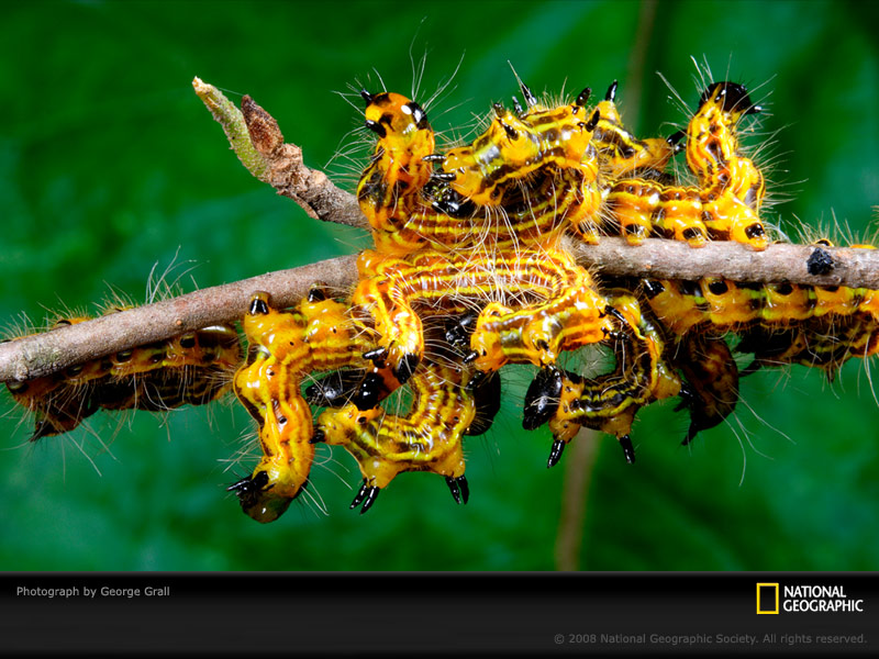 101160,xcitefun yellow caterpillars grall 1020811 sw Life in   YELLOW image gallery gallery