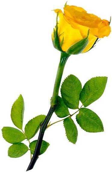 Today Friendship day.....all my GSM Friends by(anowar_virus) 103080,xcitefun-yellow