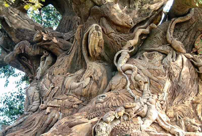 Dont miss these picz Animal Tree amazing