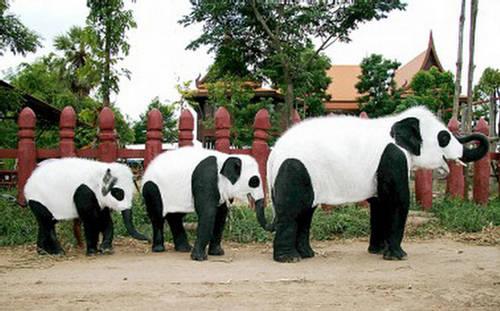 Thai Royal Elephant Pandapainted Elephants Thai