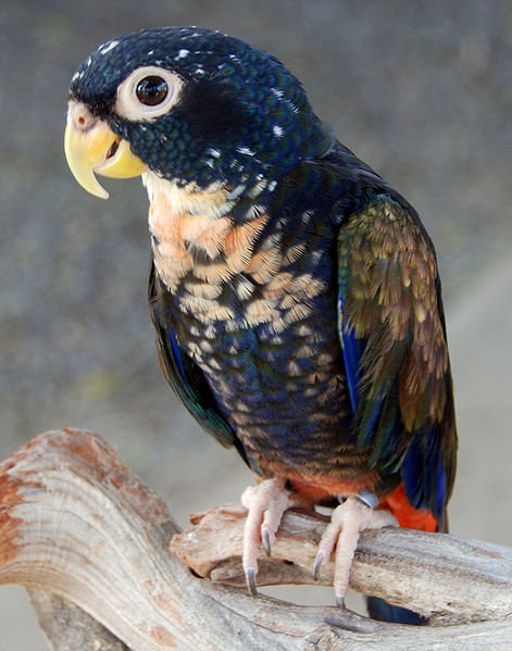 10 Most Colorful and Prettiest Pet Birds in the  World
