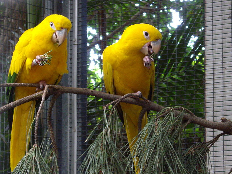 Parrots as Pets Birds Pet Birds in The World