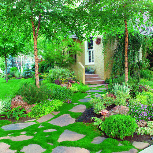 Landscaping With Irish Moss : Beautiful garden paths part ll