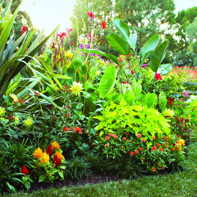 3 plans for colorful easy care spring borders for Easy care outdoor plants