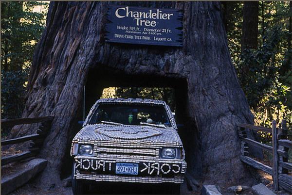 Chandelier Tree: Drive-Thru Tree Park - California - XciteFun.net