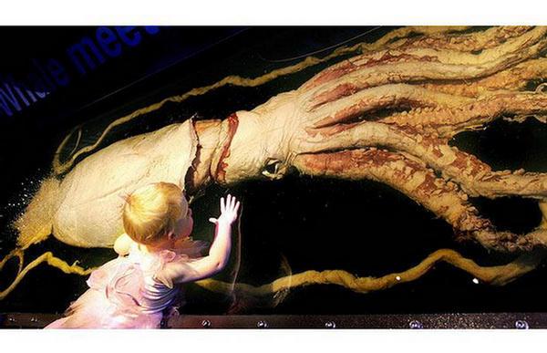 giant killer squid - photo #3