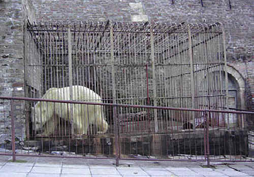 essay on animals should be kept in captivity