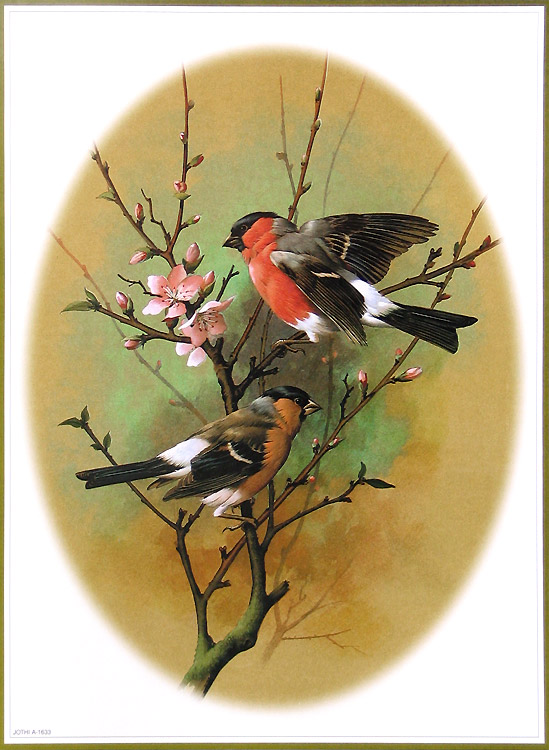 11893 post subject colorful birds paintings colorful birds paintings