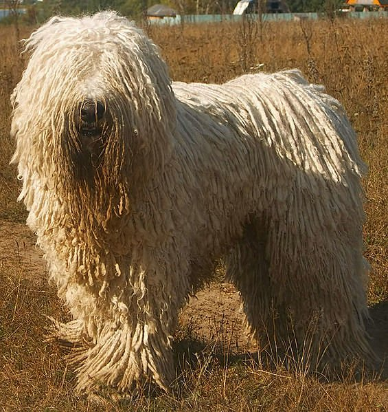 5 Animals Most In Need of a Haircut