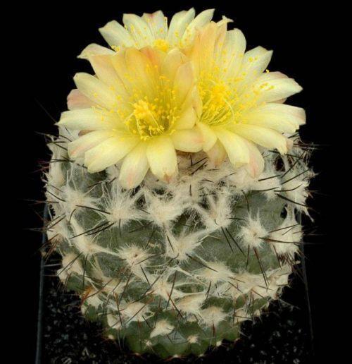 Kaktusi - Page 5 126961,xcitefun-27