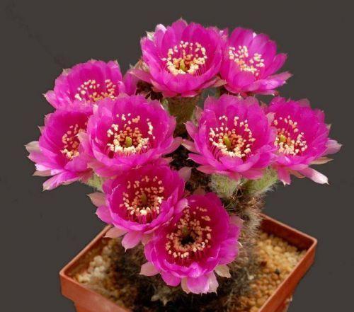 Kaktusi - Page 5 126963,xcitefun-25