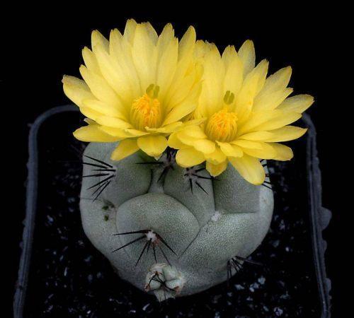Kaktusi - Page 5 126968,xcitefun-29