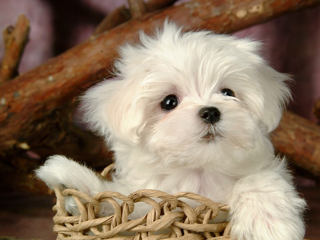 Fluffy and Cute Puppy - XciteFun.net