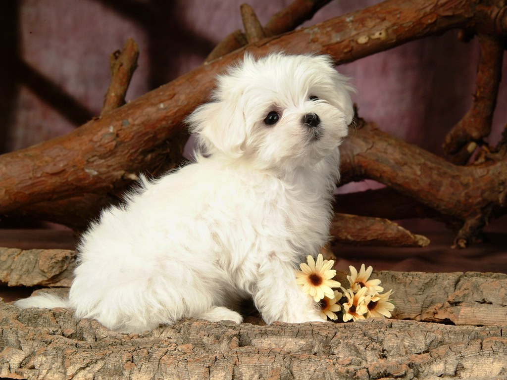 Views 18630 post subject fluffy and cute puppy fluffy and cute puppy