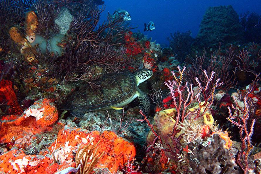 ... post subject aquarium reef photo contest aquarium reef photo contest
