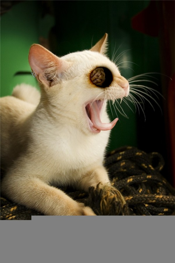 Free Desktop Wallpapers | Backgrounds: Cute Funny Animals ...  |Weird Cute Animals