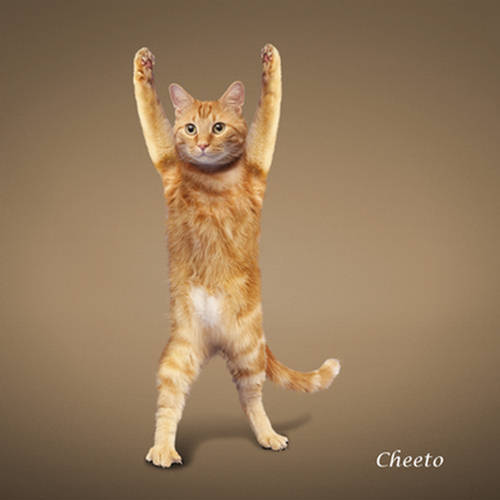 Stretching Kittens: Yoga Cats Calendar 2010 - XciteFun.net