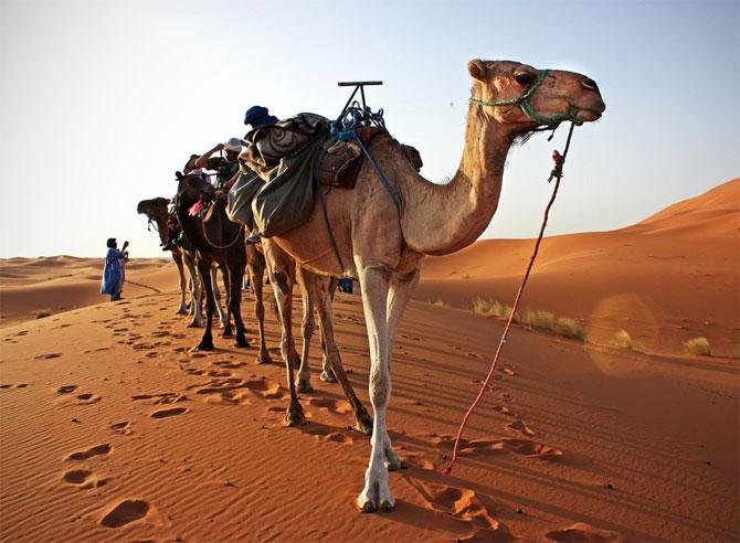 Caravan in the Desert - XciteFun.net