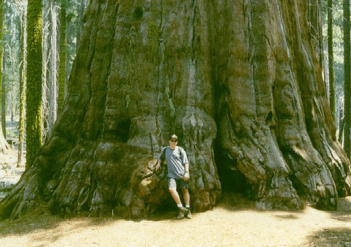 http://img.xcitefun.net/users/2010/01/139739,xcitefun-biggest-tree-.jpg