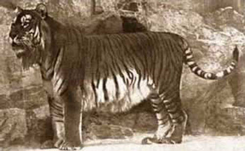 Extinct Animals - Animals We Will Never See - XciteFun.net