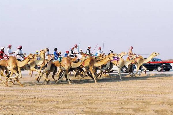 Run For Fun  Racing Animals