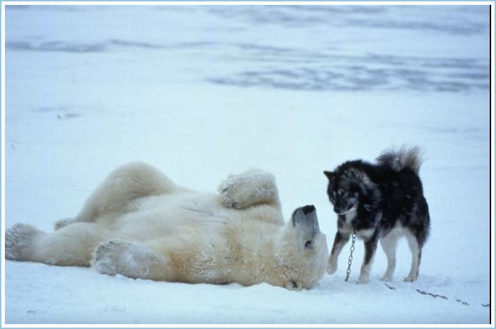Animal Friendship Pics