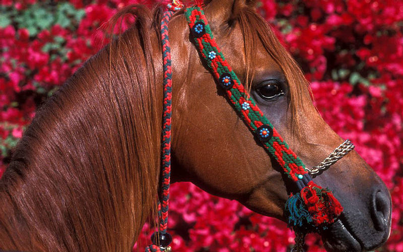 151781xcitefun horses 1 - Beautiful Colors of Horses