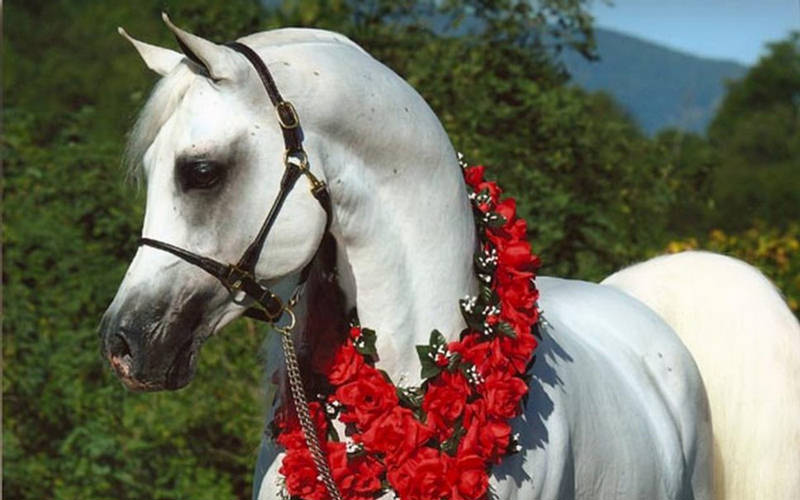 Posted: Mar 05, 2010 Post subject: Re: Beautiful Colors of Horses