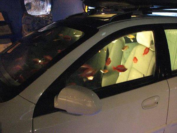 First car fish aquarium for First fish tank