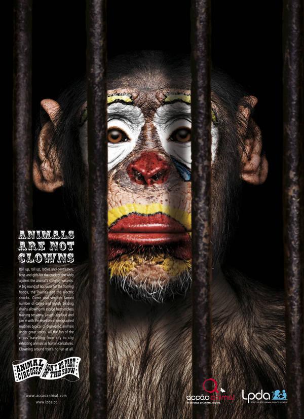 Clowned animal circus