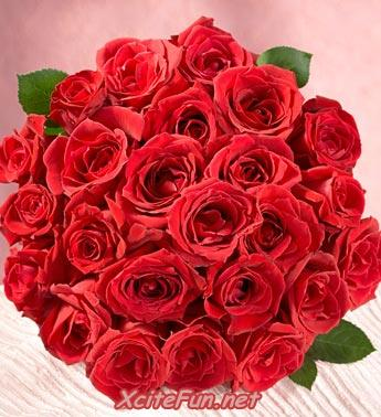 Beautiful Red Roses Bucket