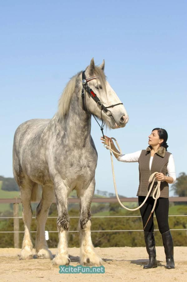 ... 2968 post subject the worlds tallest horse the worlds tallest horse