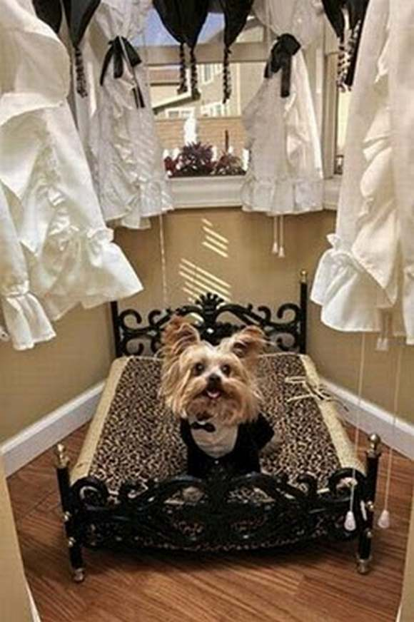 Most Luxurious Dog House In The World Xcitefun Net
