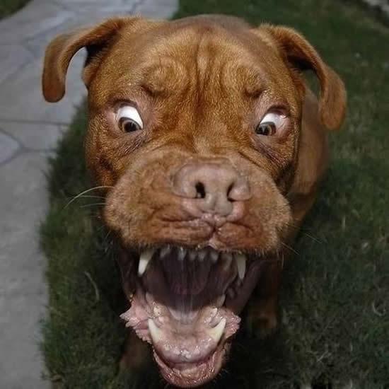 World,s Scariest Dog