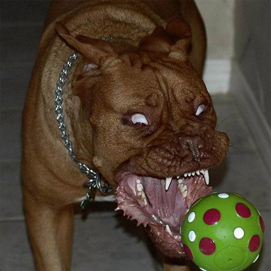 ... views 13366 post subject world s scariest dog world s scariest dog