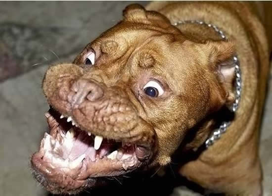 views 14718 post subject world s scariest dog world s scariest dog