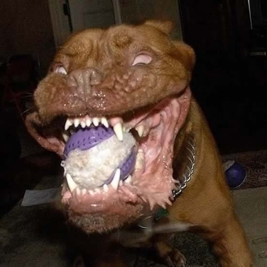 World,s Scariest Dog