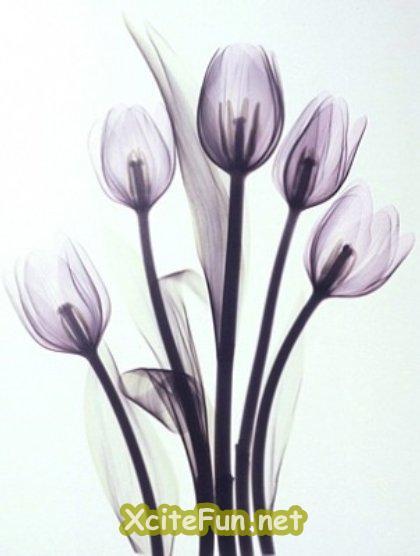 Flowering x ray art for X ray painting